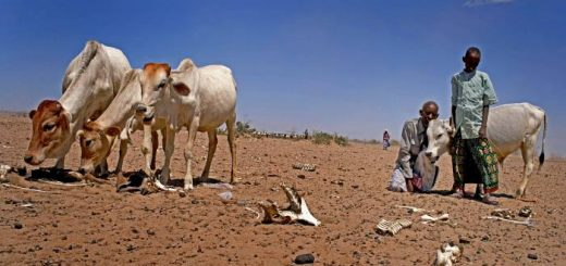 drought-in-ethiopia