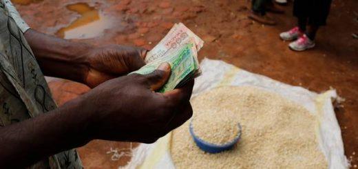 maize-trade